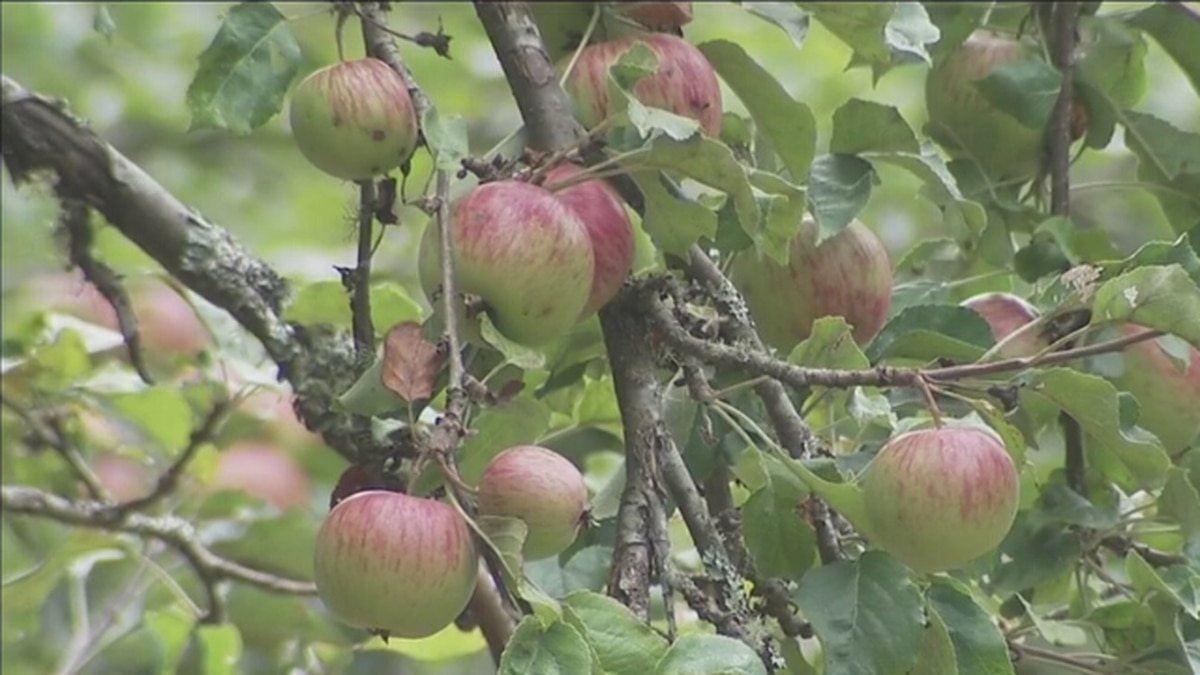Farmworkers test positive for COVID-19 at Washington orchard
