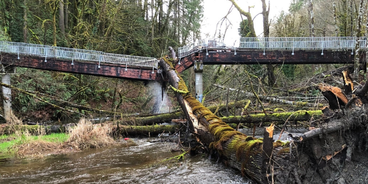 Sewage spills into Olympia creek after pipe damaged by fallen tree
