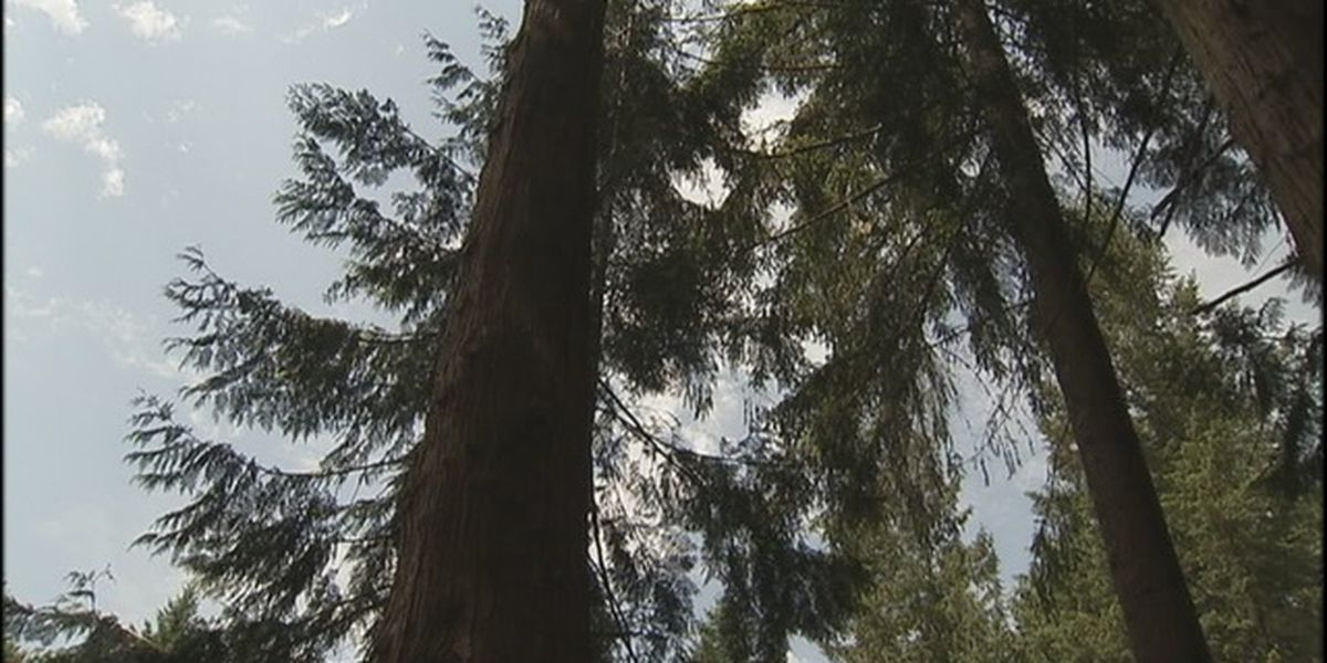 Forest Service hiring for 1,000 jobs in Pacific Northwest