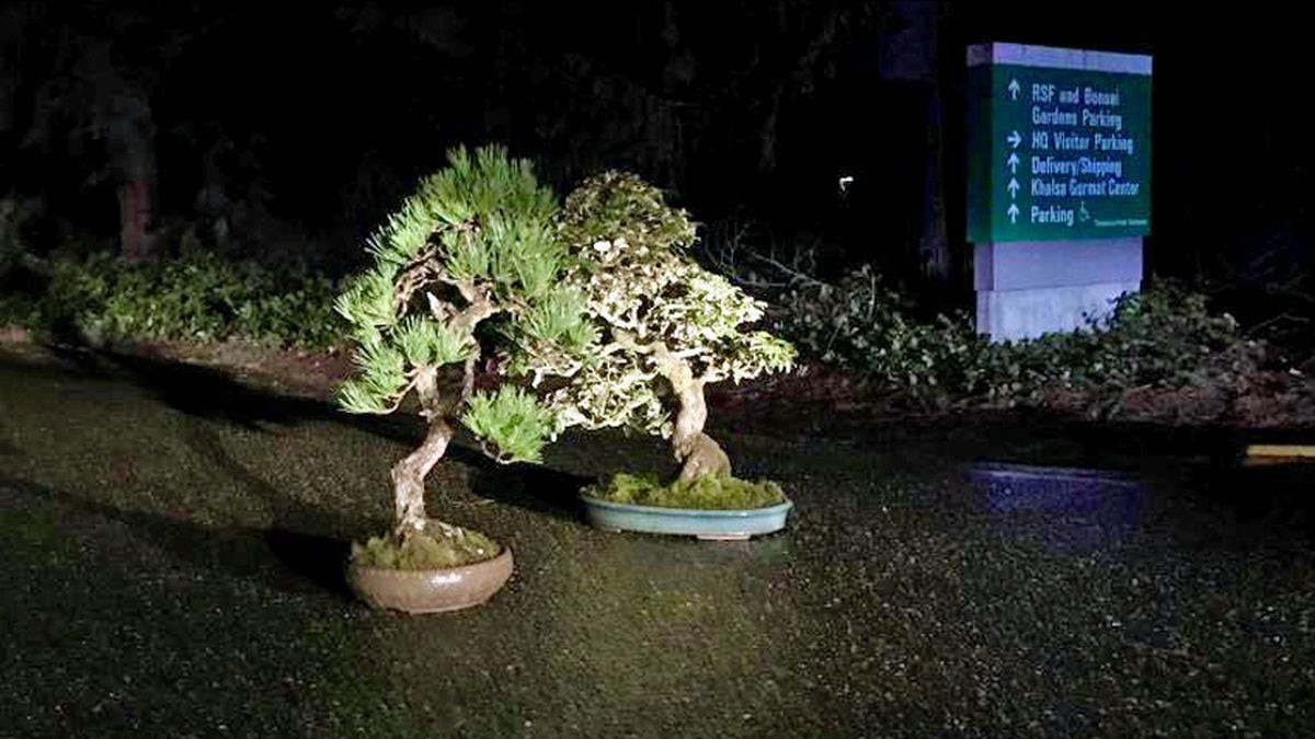 Stolen bonsai trees 'mysteriously returned' to Federal Way museum