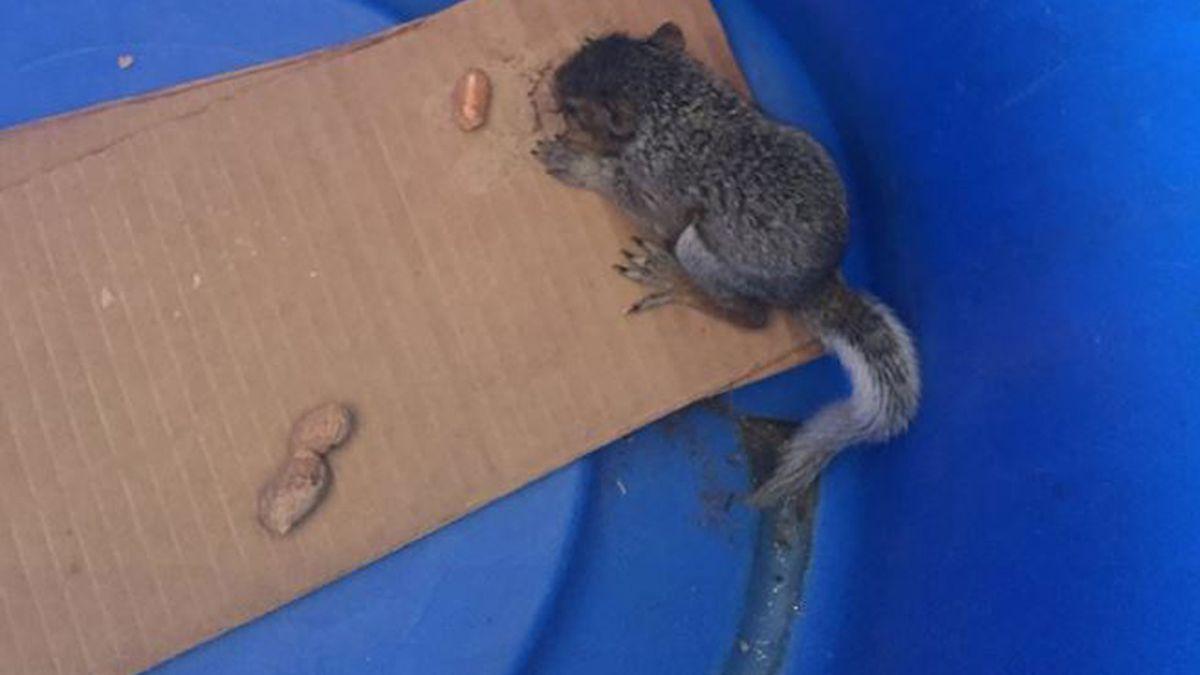 Pet squirrel found in Auburn student's locker