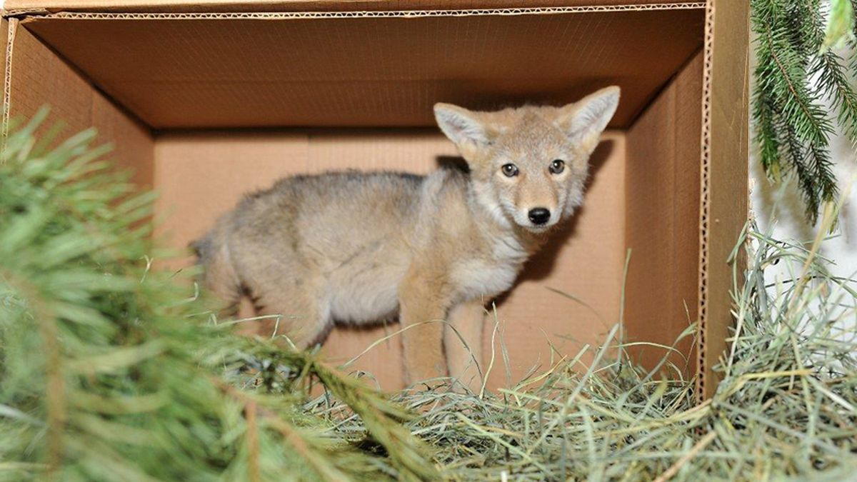 Wildlife officials: Don't pick up baby animals you think have been abandoned