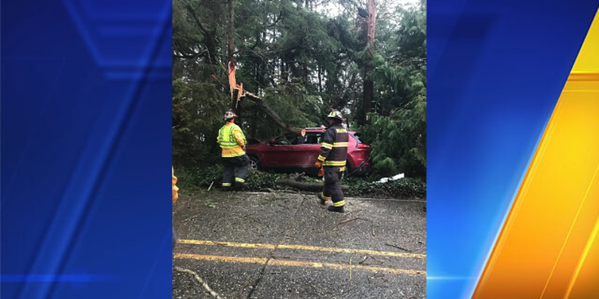 Suspected DUI driver crashes, causes tree to fall on road, police say