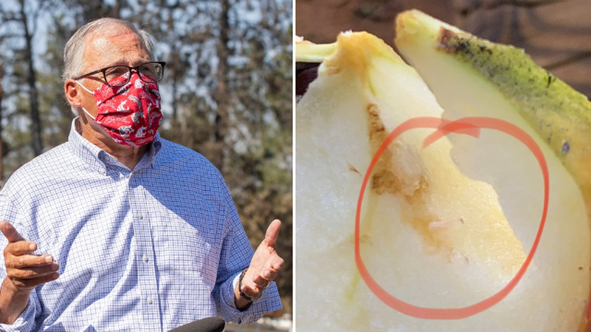 'We regret that mistake': Inslee apologizes for gifting apples that tested positive for maggot larvae