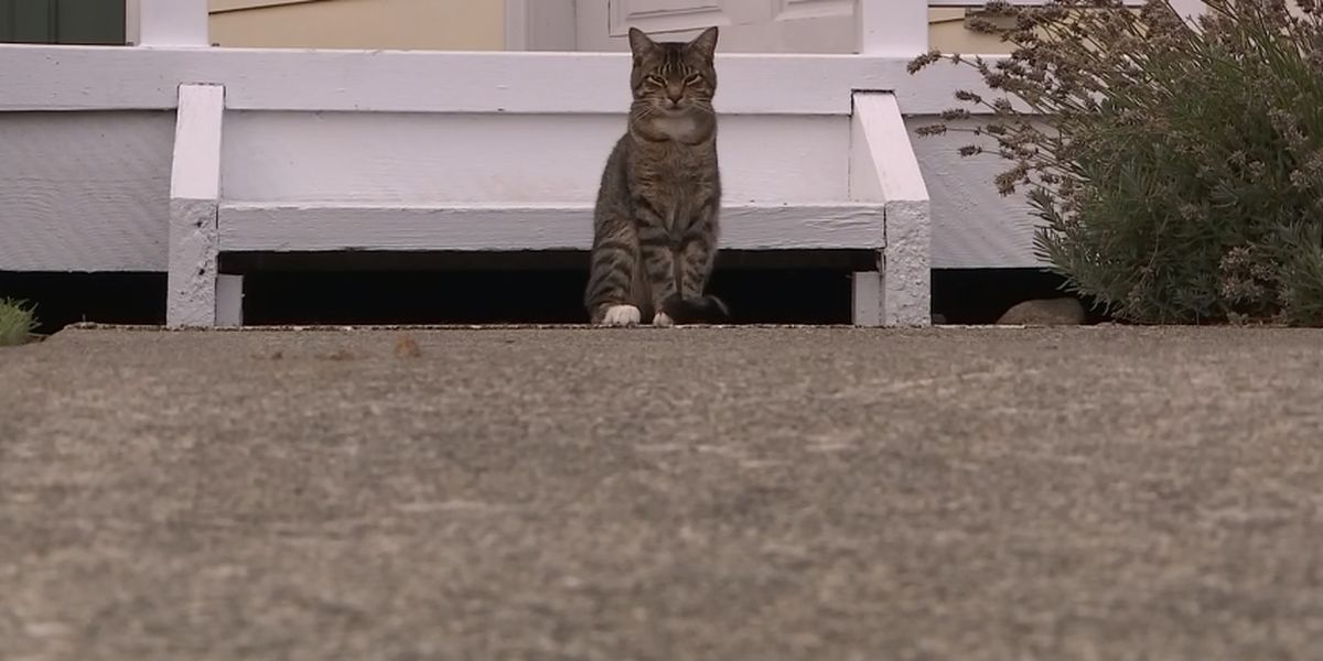 Everett police give update on mutilated cat investigation