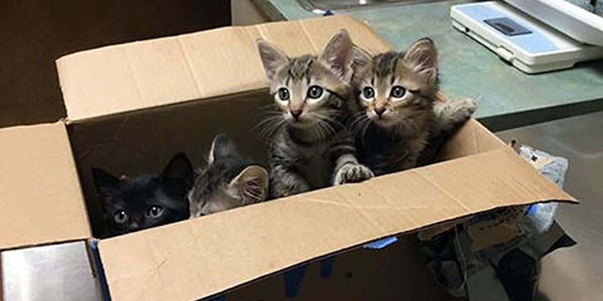 Police respond to suspicious package, find abandoned kittens