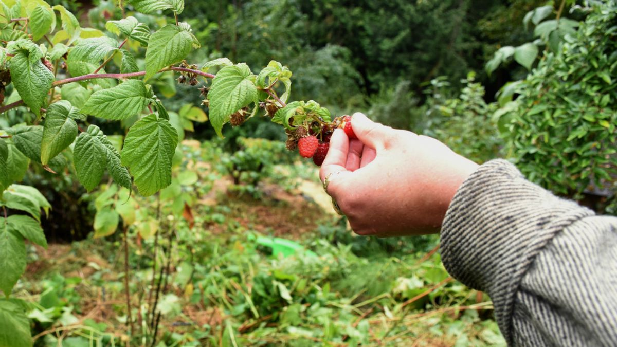 Woolley Food Forest Association aids local food bank