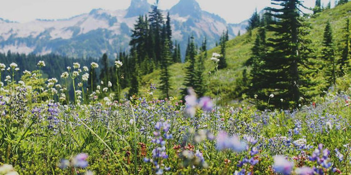 Gov. Inslee announces $1.3 million grant to help kids experience outdoors
