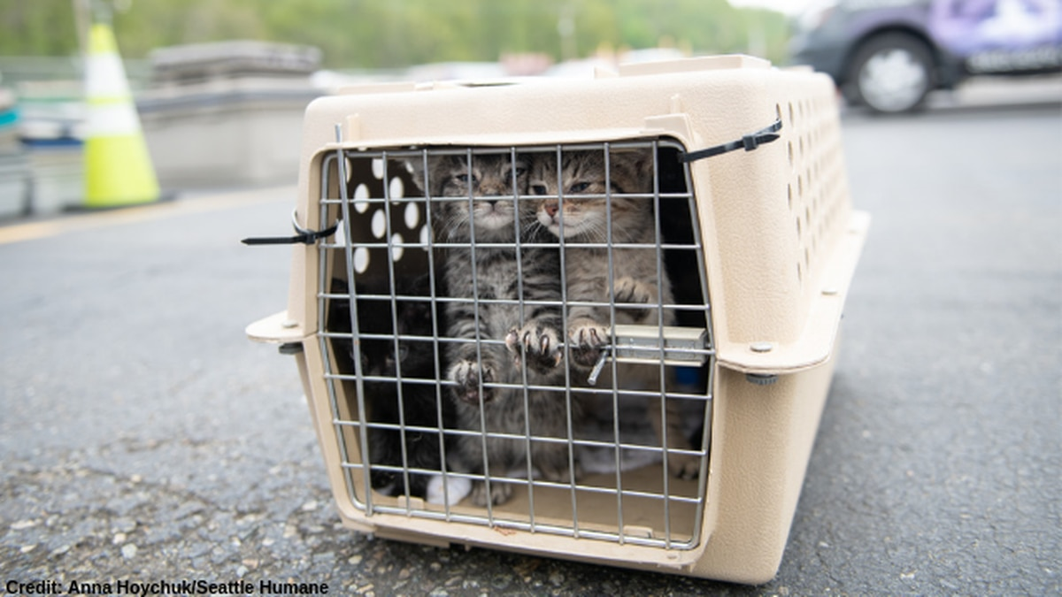 Over 100 at-risk shelter pets arrive in Seattle to find forever homes