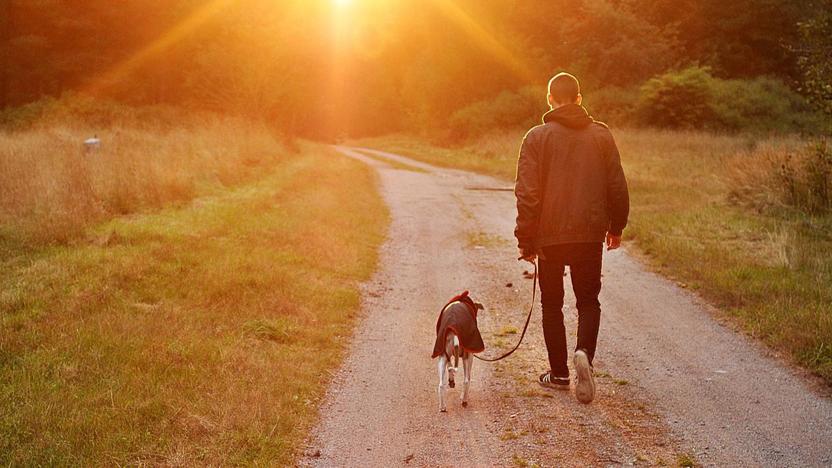 Dog owners are happier than cat owners, here's why