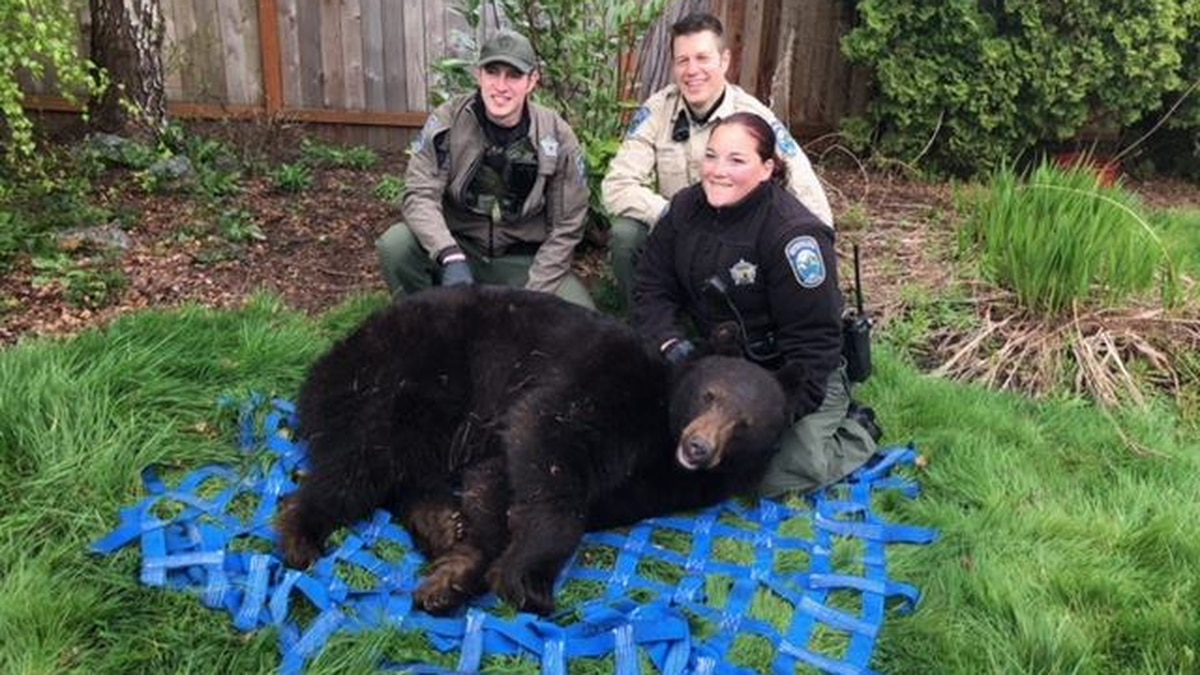 Fish and Wildlife officers remove bear spotted in Monroe neighborhood