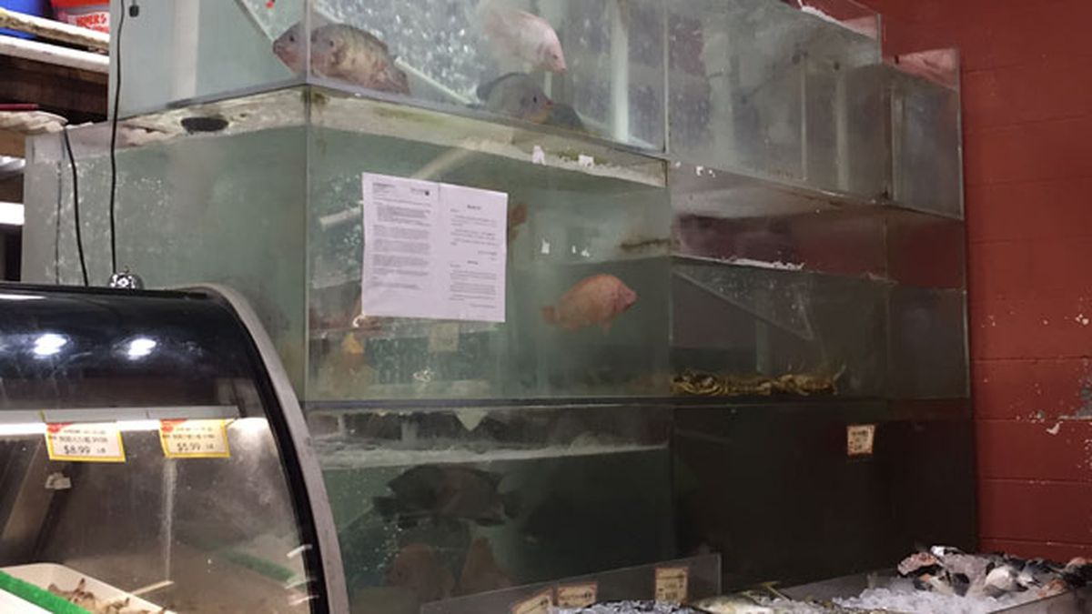 Flesh-eating bacteria investigated from Bellevue market fish
