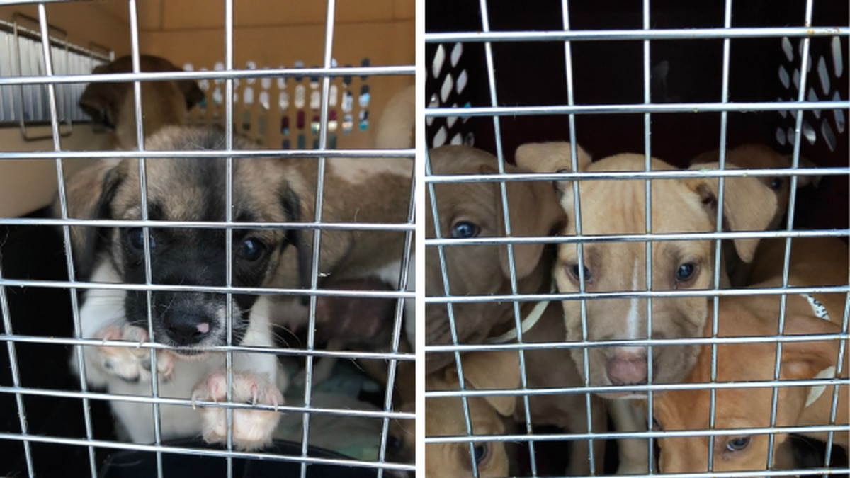 More than 100 at-risk shelter pets flown to Everett for adoption