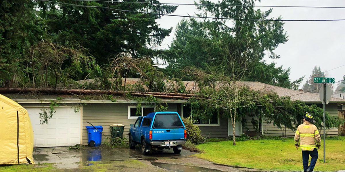 Tree falls on house in Lacey amid strong winds