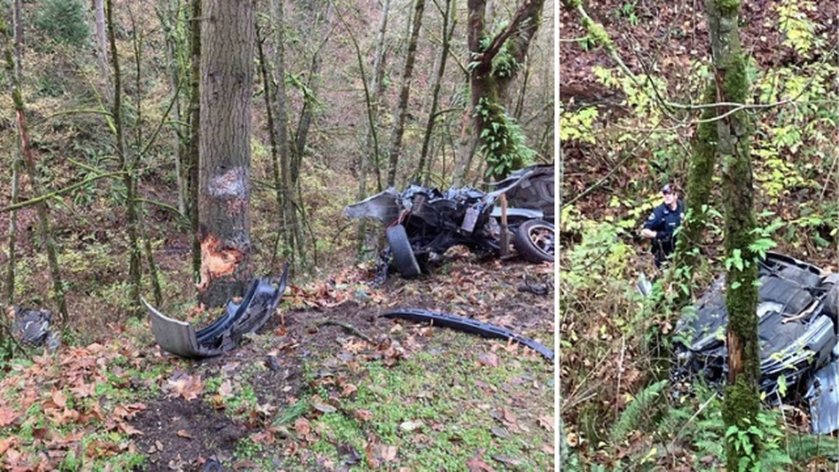 Couple escape serious injury, crawl from wreckage after car slams into tree and rips in half