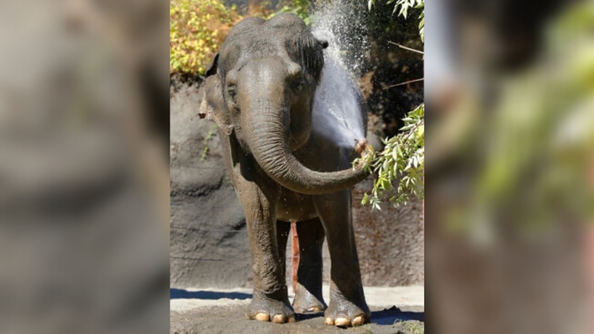 Asian elephant in declining health euthanized at Point Defiance Zoo