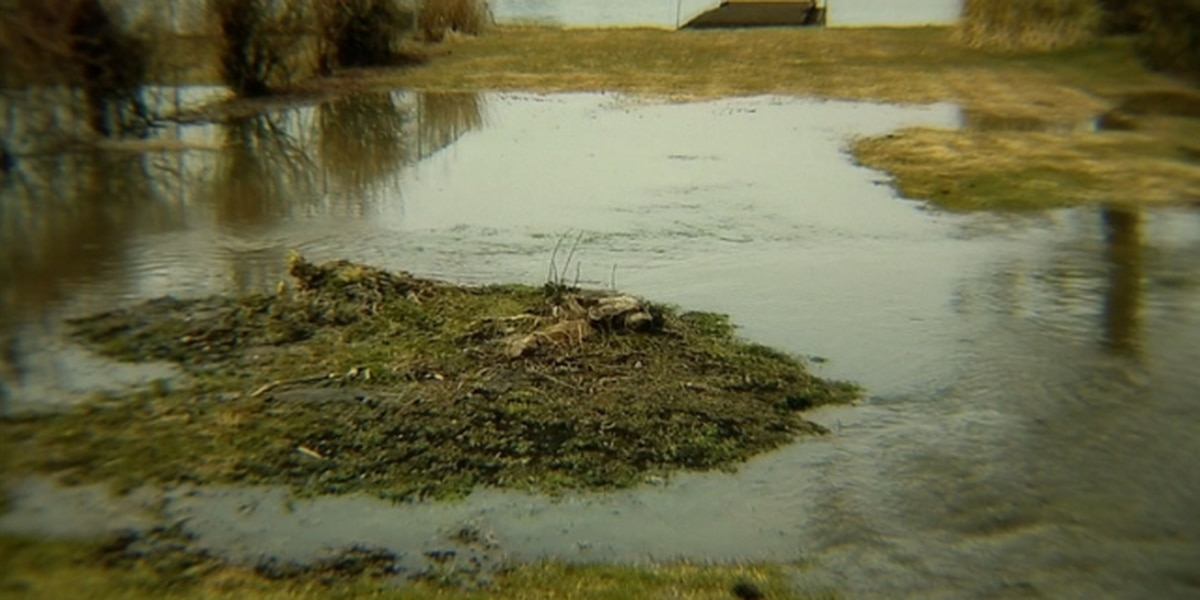 How a family's backflow preventer saved their house from raw sewage