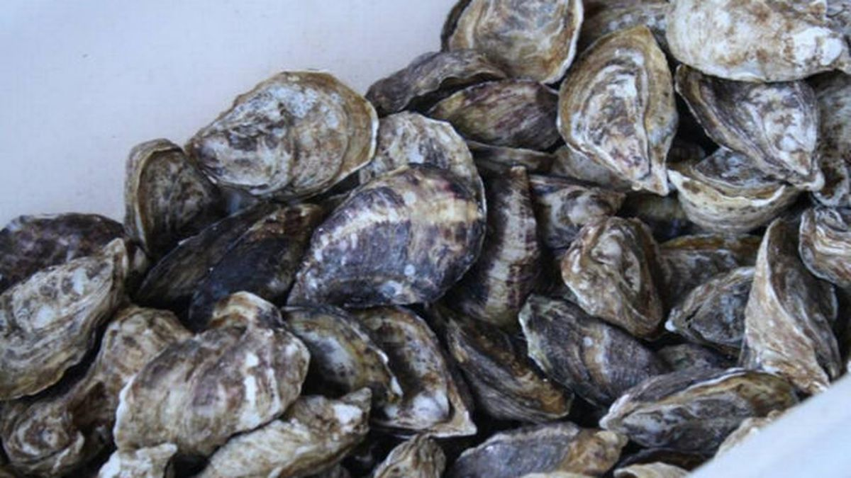 Department of Health closes shellfish harvest area due to pollution