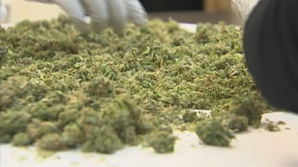 Medical pot database could cause delays for medical marijuana users